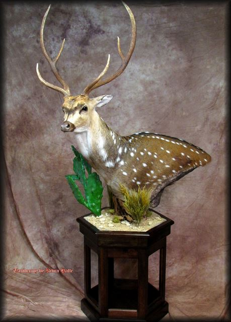 Axis Deer Pedestal