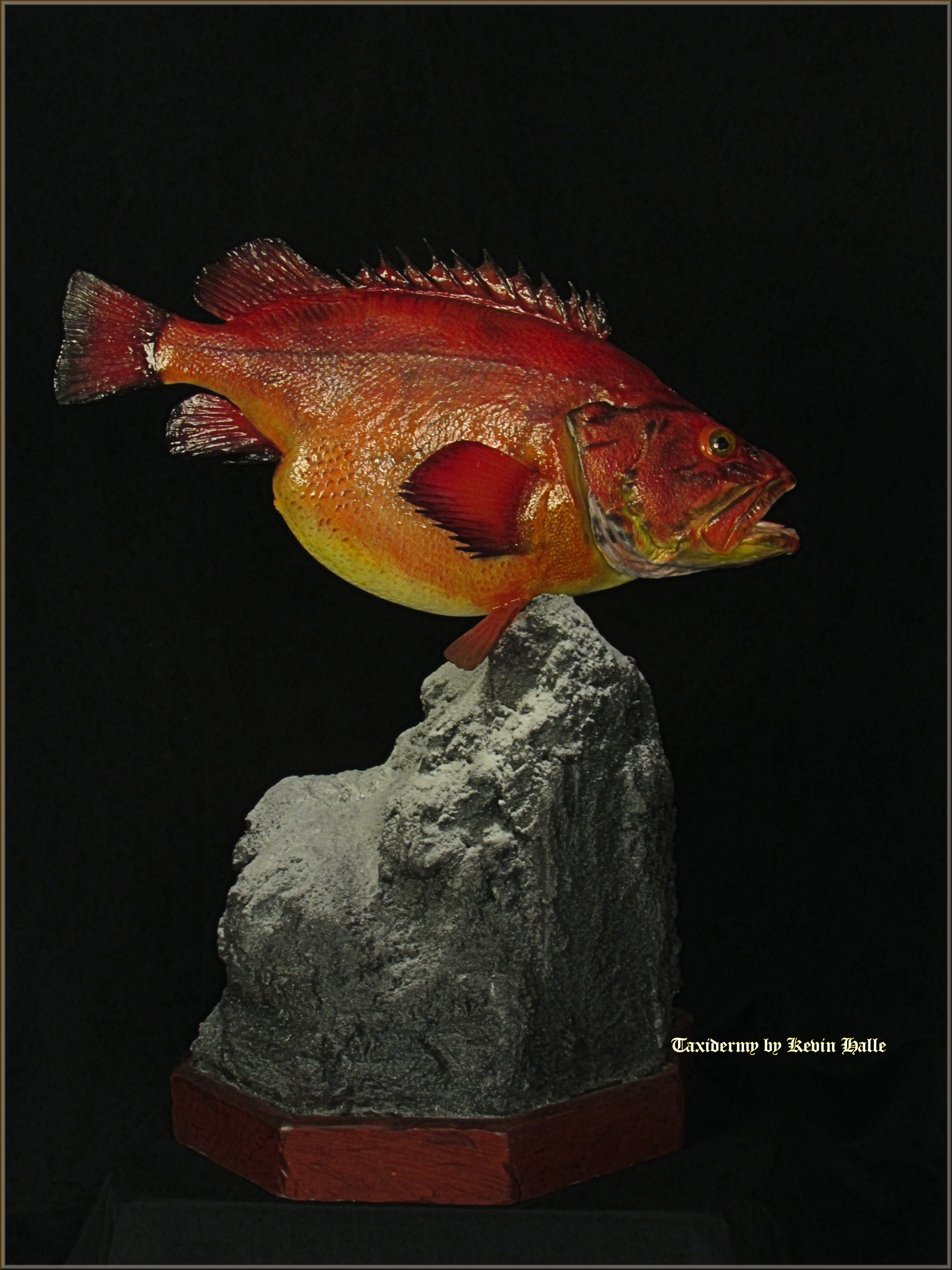 Yelloweyed Rockfish